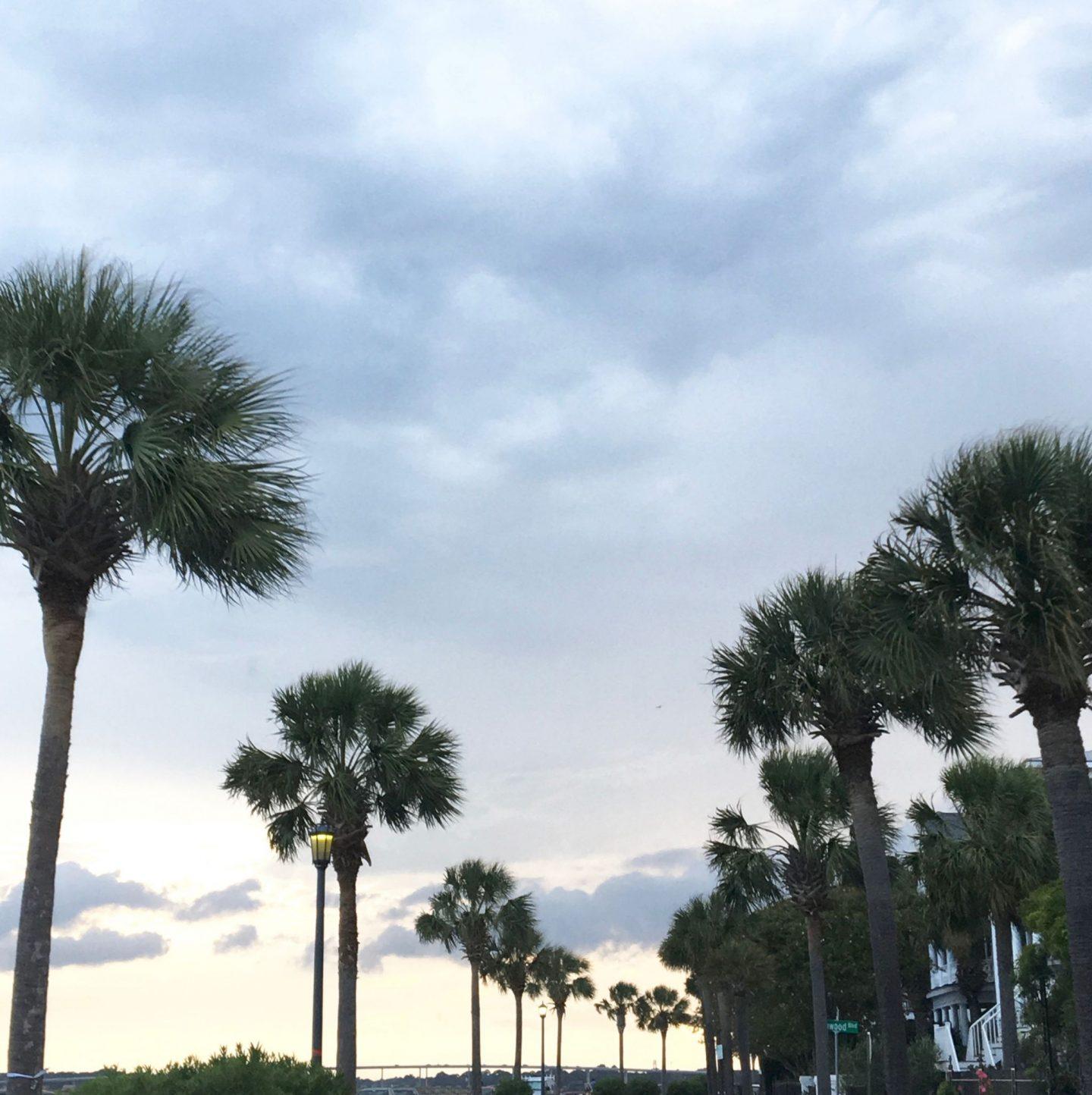 charleston travel guide, charleston sunset, palm trees of charleston